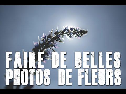 COMMENT FAIRE DE BELLES PHOTOS DE FLEURS?