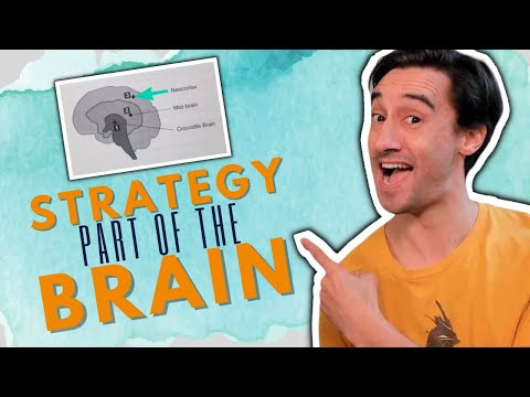 The part of your brain that creates marketing funnel strategy